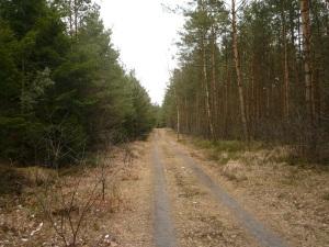 22.03.13 Waldweg