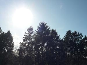 24.03.13 Tannen