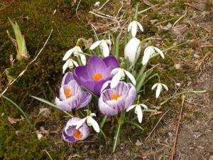 01.04.13 Frühling
