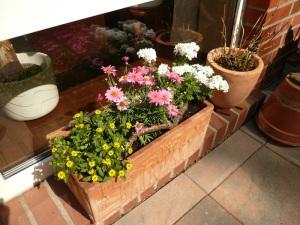 04.05.13 Blumen4