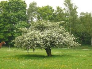 20.05.13 Baum