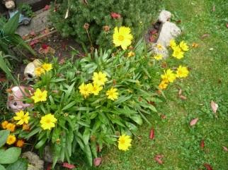 06.10.13 Blumen1