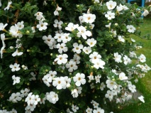 06.10.13 Blumen2