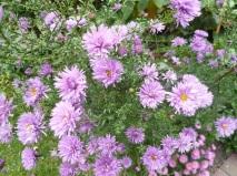 06.10.13 Blumen3