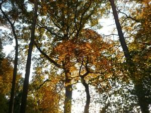 24.10.13 Herbstlaub