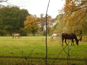 25.10.13 Pferde