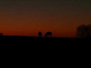 25.11.13 Schafe