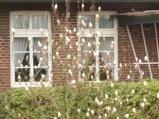 18.03.14 Magnolie