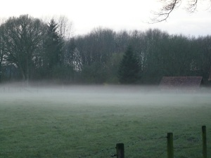23.03.14 Nebel