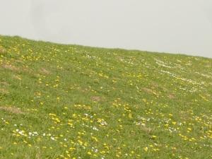 31.03.14 Blütendeich