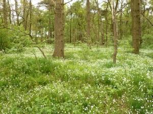 03.05.14 4 Blütenteppich