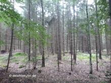 Wow, Wald