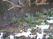 Allererste Frühlingsboten