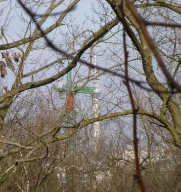 Alex hinter Bäumen und Baukran