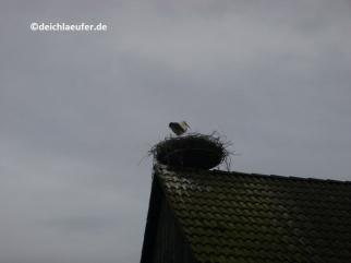 Das brat mir einer einen Storch ...