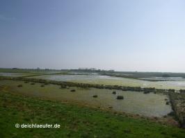 Fallen trocken: Bornhorster Wiesen
