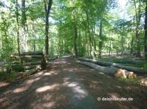 Viel Einschlag im Stadtwald