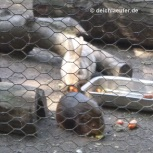Hasenheide oder Meerschweinchenheide? :-)