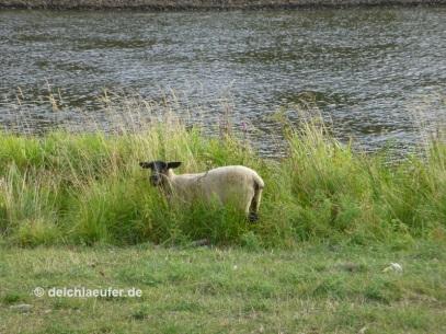 In Wassernähe ist das Gras so schön Grün