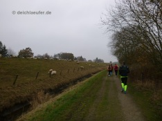 Cool, Deich und Schafe