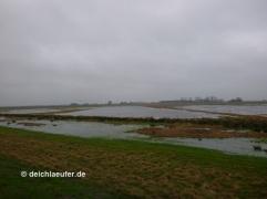 Die Bornhorster Wiesen ...