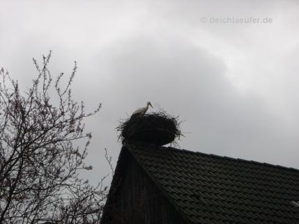 Das Storchennest ist ...