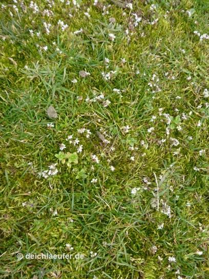 ... ganz kleinen, mir unbekannten Blumen