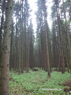 Noch mehr Bäume!
