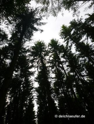Hohe Bäume!