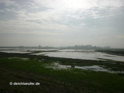 Nach dem vielen Regen schon reichlich Wasser in den Bornhorster Wiesen