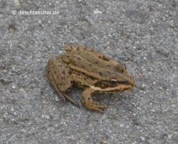 Sei trotzdem kein Frosch