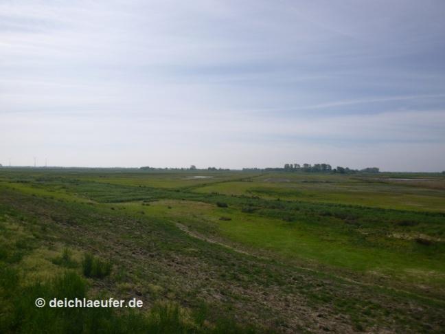 Weg ist das Wasser aus den Bornhorster Wiesen