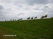 ... und Schafe